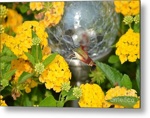 Garden Metal Print featuring the photograph A Gardens Beauty by Kathy Gibbons