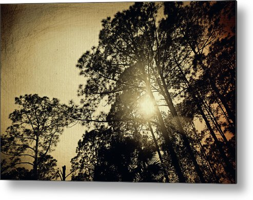 Trees Metal Print featuring the photograph A Hint Of Sunshine by Laurie Perry