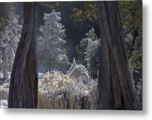 north Woods fairy Tale gooseberry Falls gooseberry River lake Superior minnesota northern Minnesota north Shore river spring Melt spring cedars river Spray ice woods magical magnificent wow nature greeting Cards mary Amerman Metal Print featuring the photograph A Twisted Fairy Tale by Mary Amerman