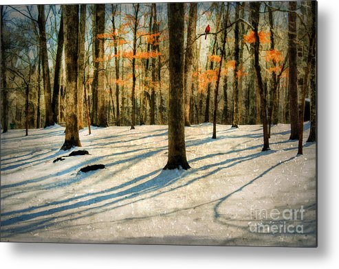 Bird Metal Print featuring the photograph A Touch Of Autumn by Darren Fisher