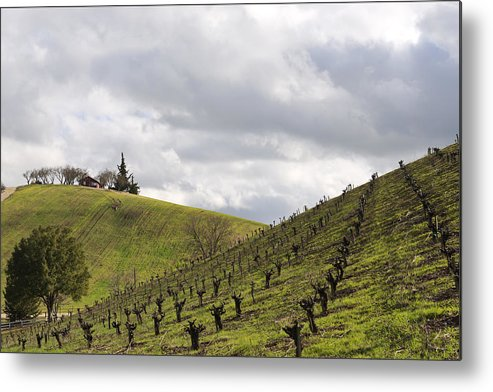 Vineyards Metal Print featuring the photograph A View From Nadeau by Mike Herdering