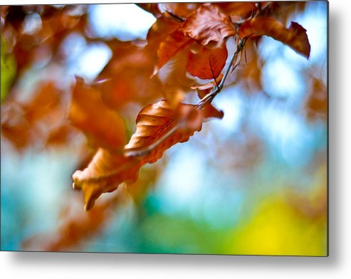 Leafs Metal Print featuring the photograph Abstract Leafs by Tino Lopes