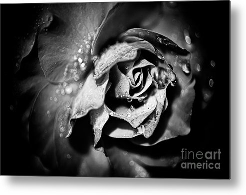 Beauty In Nature Metal Print featuring the photograph After The Storm by Venetta Archer
