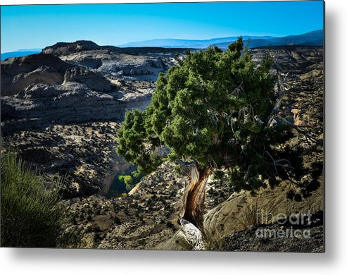Brown Metal Print featuring the photograph Against The Odds by Rich Priest