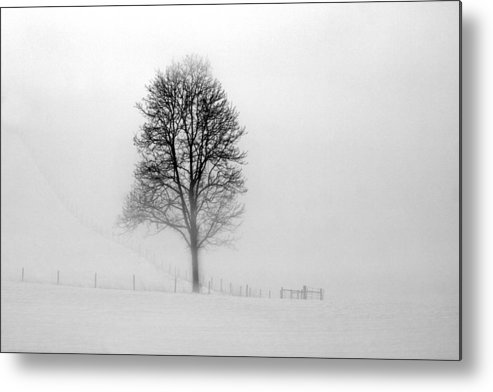 Tree Metal Print featuring the photograph Alone by J Brett Whitesell