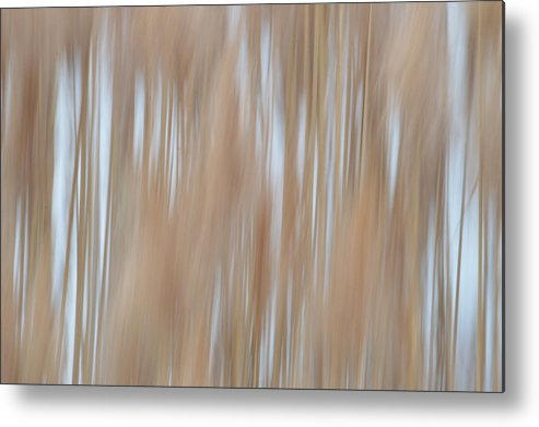 Quita Jean Metal Print featuring the photograph Amber Waves Of Grain by Quita Jean