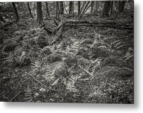 Burns Conservation Area Metal Print featuring the photograph Ancient Grove by Alan Norsworthy