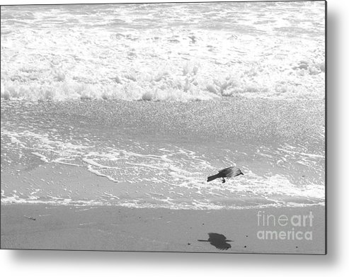 Beach Metal Print featuring the photograph As The Crow Flies by Artist and Photographer Laura Wrede