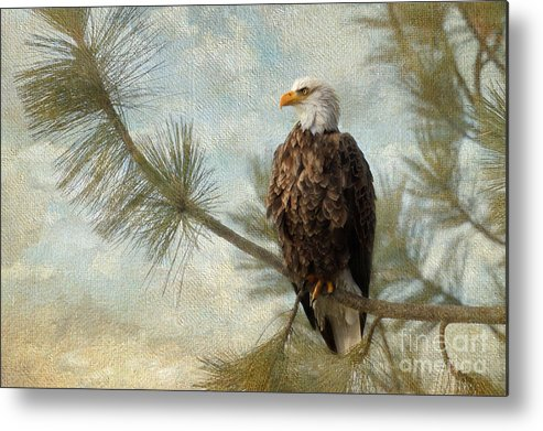 Bald Eagle Metal Print featuring the photograph At Peace by Beve Brown-Clark Photography