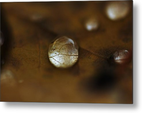Autumn Metal Print featuring the photograph Autumn Blob by Michal Stosel