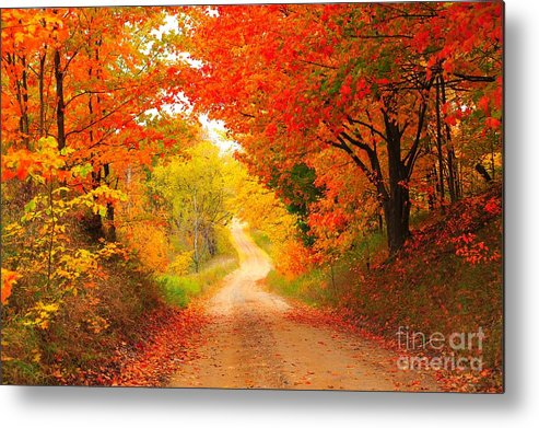 Autumn Metal Print featuring the photograph Autumn Cameo 2 by Terri Gostola