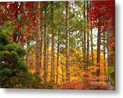 Autumn Metal Print featuring the photograph Autumn Canvas by Carol Groenen