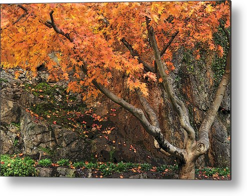 Tree Metal Print featuring the photograph Autumn Of My Life by Terri Tuazon