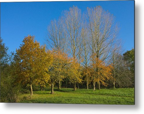Canon Metal Print featuring the photograph Autumn Trees by Jeremy Hayden