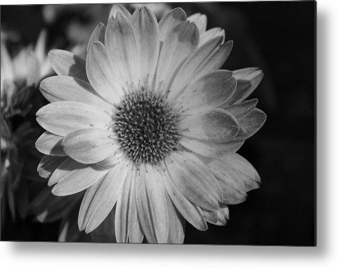 Black And White Metal Print featuring the photograph Awaiting A Mate by Jennifer Gillis