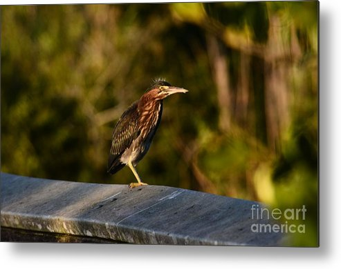 Birds Metal Print featuring the photograph Baby Green I by Edna Weber