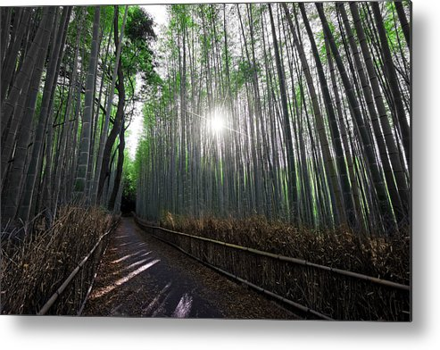 Bamboo Metal Print featuring the photograph Bamboo Forest Path Of Kyoto by Daniel Hagerman