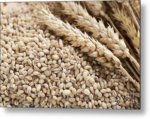 Ingredients Metal Print featuring the photograph Barley Grains And Stalks by Charlotte Lake