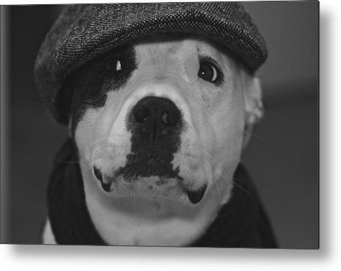 Dog Metal Print featuring the photograph Be Cool by Jean-Pierre Mouzon