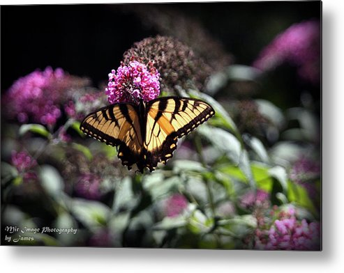 Butterfly Metal Print featuring the photograph Beautiful Butterfly by James Barrere