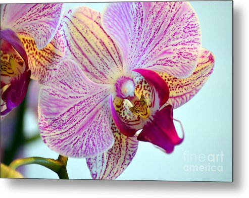 Orchid Metal Print featuring the photograph Beautiful Orchid by Anne Marie Corbett