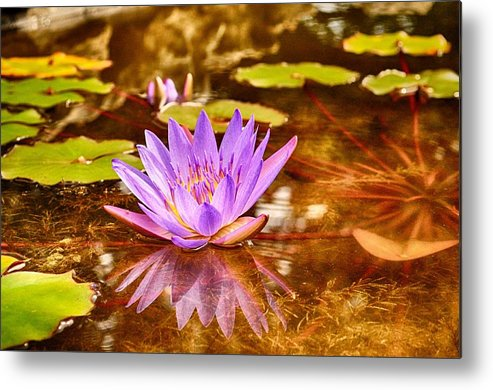 Reflection Photograph Metal Print featuring the photograph Beautiful Reflections by Kristina Deane