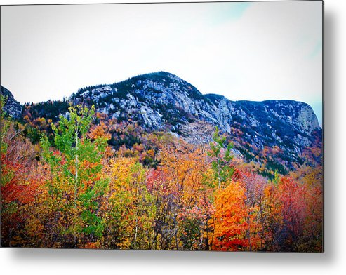 Foliage Metal Print featuring the photograph Beauty At The Base by Bancrofts Finest Photography