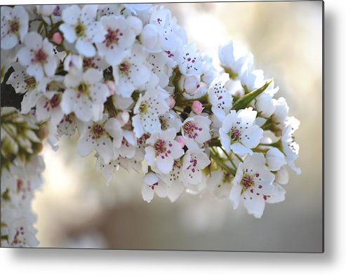 White Metal Print featuring the photograph Beauty Of Spring by P S