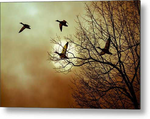 Duck Metal Print featuring the photograph Before A Winter Sky by Bob Orsillo