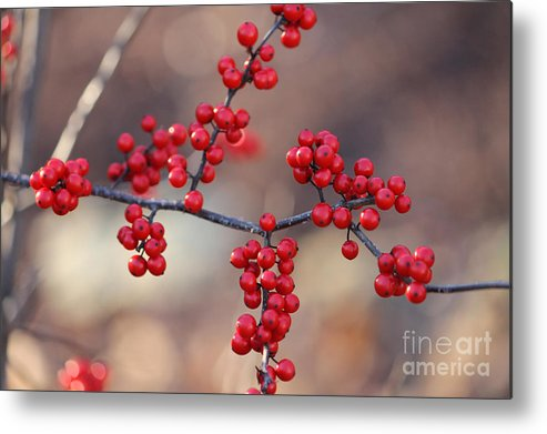 Red Metal Print featuring the photograph Berry Sparkles by Ulli Karner