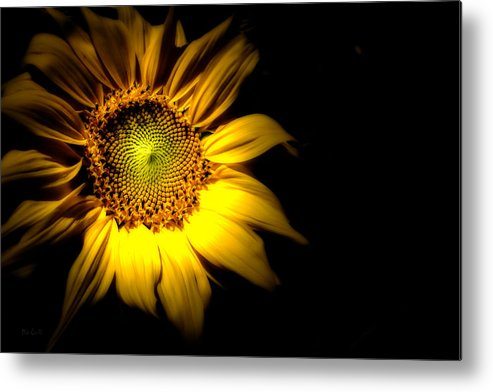 Sunflower Metal Print featuring the photograph Between Here And There by Bob Orsillo