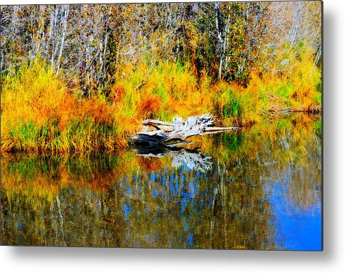 Branches Metal Print featuring the photograph Bird Branch Reflection by Marcy Wagman