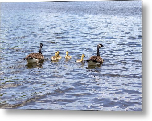 2013 Metal Print featuring the photograph Bird Family by Terry Thomas