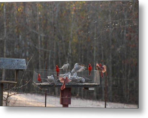 Nature Metal Print featuring the photograph Bird Feeder by Leon Burns