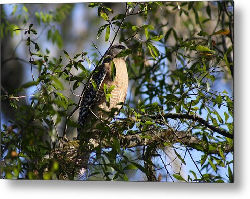 Bird Metal Print featuring the photograph Bird In Trees by Shari Bailey