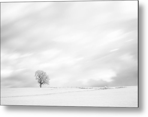Autumn Metal Print featuring the photograph Black And White Tree by U Schade