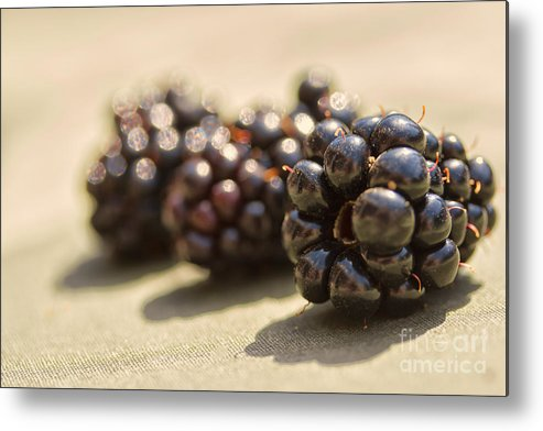 Blackberry Metal Print featuring the photograph Blackberries by Sophie McAulay