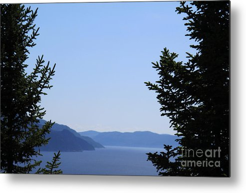 Trees Metal Print featuring the photograph Blue Clearing by Andre Paquin