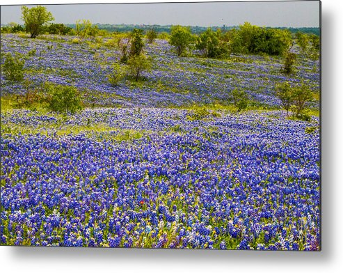 Bluebonnets Metal Print featuring the photograph Bluebonnets Over Hill And Dale by Ronnie Prcin