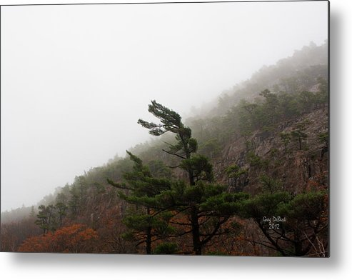 Trees Metal Print featuring the photograph Bowing To Pressure by Greg DeBeck