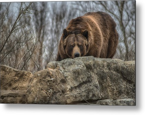 Brown Bear Metal Print featuring the photograph Brown Bear by Garett Gabriel