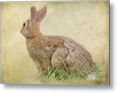 Animals Metal Print featuring the photograph Brown Bunny by Tom York Images