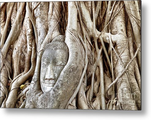 Asia Metal Print featuring the photograph Buddha Head In Tree Wat Mahathat Ayutthaya Thailand by Fototrav Print