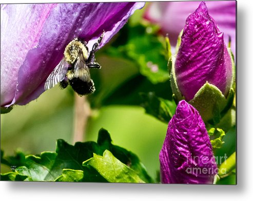 Insect Metal Print featuring the photograph Bumble Bee Vii by Ms Judi
