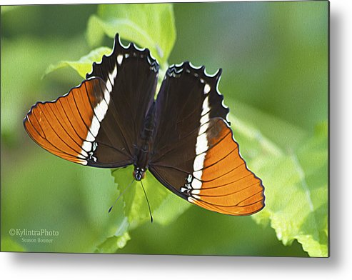 Butterfly Metal Print featuring the photograph Butterfly 1 by Season Bonner