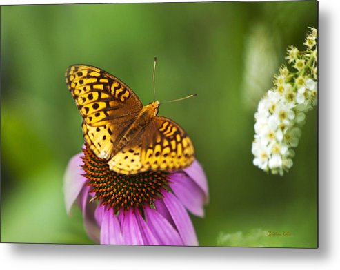 Butterfly Metal Print featuring the photograph Butterfly Love by Christina Rollo