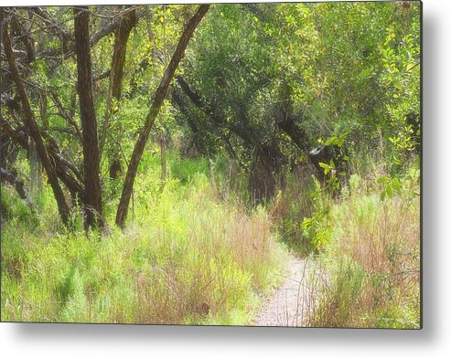 Metal Print featuring the photograph Buttonwood Forest by Rudy Umans