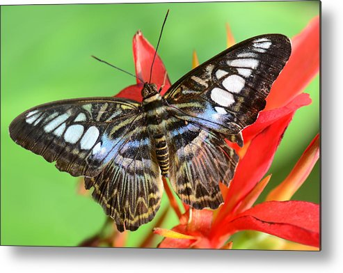Metal Print featuring the photograph Butwon-475 by Susan Henne