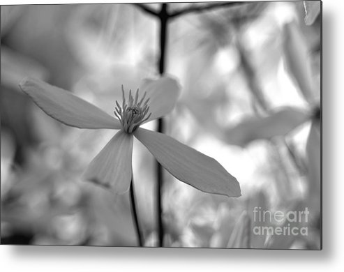 Spring Metal Print featuring the photograph Bw Clematis by Ben Baucum