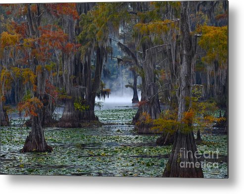 Morning Metal Print featuring the photograph Caddo Lake Morning by Snow White
